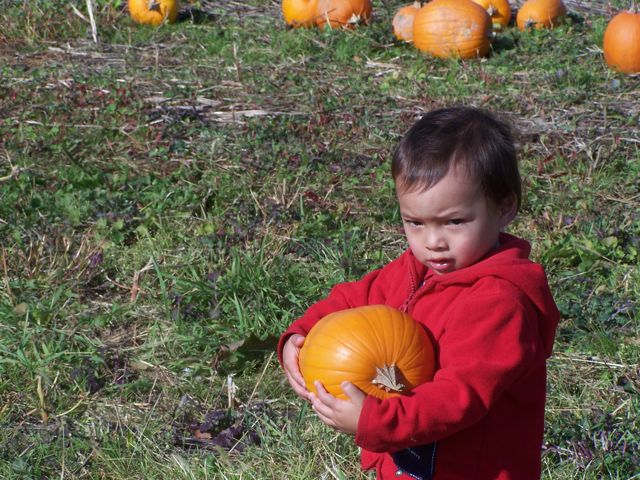 PickingPumpkins.jpg